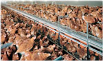 cage-free-hens
